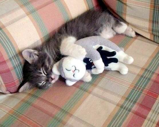cat_hug.jpg
